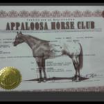 מועדון סוסי אפלוסה בישראל