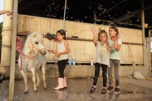 ספר הילדים סוסים וחברים