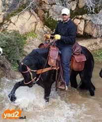 לירן אוזן מכירת סוסים