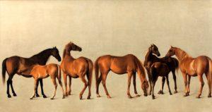 www.mayhorse.com