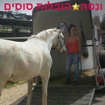 ונסה הובלת סוסים